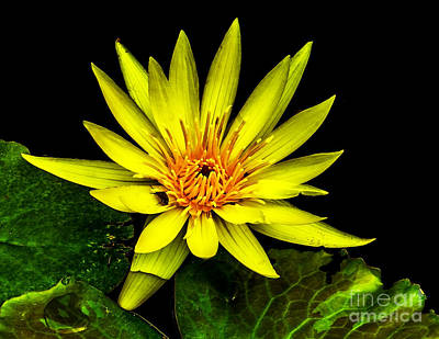 Photograph - Water Lily 2014-8 by Nick Zelinsky