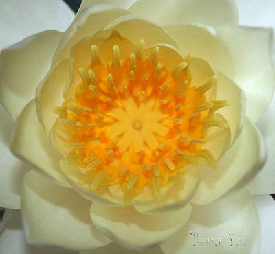 Lilies Photograph - Water Lily 3  And A Reminder To Utter The Words Thank You.  by Raenell Ochampaugh