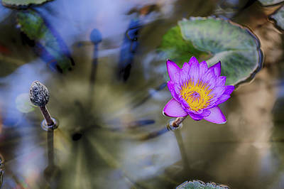 Photograph - Water Lily 3 by Scott Campbell