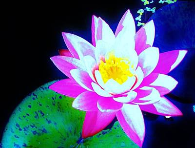 Bath Time - Water Lily Absratrct by  Sharon Ackley