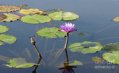Water Lily And Dragon Fly One Art Print by J Jaiam