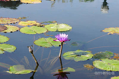 Water Lily And Dragon Fly Two Art Print by J Jaiam