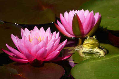 Photograph - Water Lily And Frog by Ann Bridges