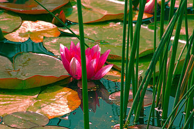 Water Lily Art Print by Bonnie Bruno