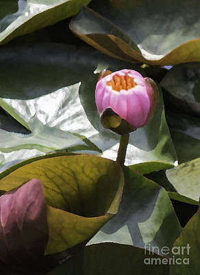Upperville Photograph - Water Lily Bud by Arlene Carmel