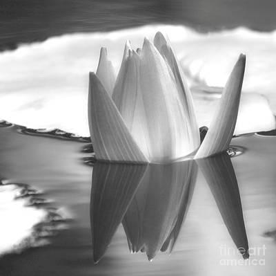 Photograph - Water Lily Bud Reflected #1 by Sabrina L Ryan