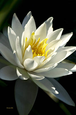 Photograph - Water Lily by Christina Rollo