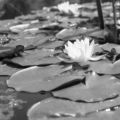 Photograph - Water Lily by Christopher Rees