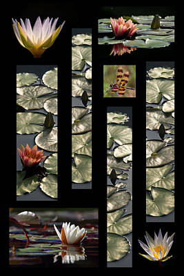 Photograph - Water Lily Collage by Leda Robertson