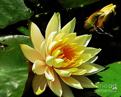 Photograph - Water Lily by Dawn Gari