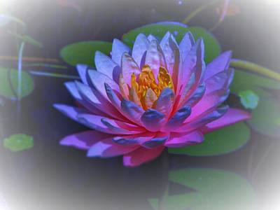 Photograph - Water Lily by Debra Madonna