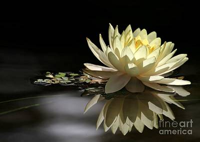Photograph - Water Lily Dream by Sabrina L Ryan