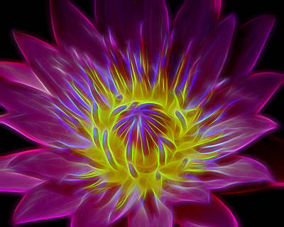 Photograph - Water Lily Electrified by Allen Beatty
