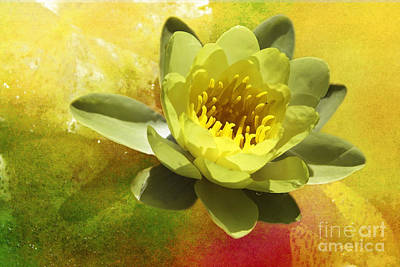 Photograph - Water Lily by Ellen Cotton
