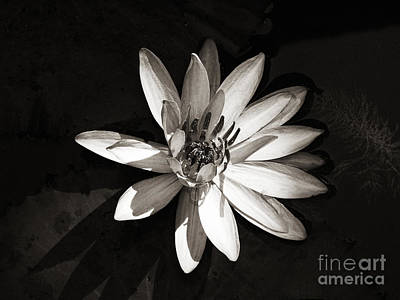 Photograph - Water Lily by Ethna Gillespie