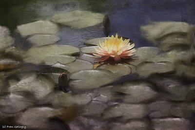 Photograph - Water Lily by Fran Gallogly