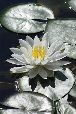 Art Print featuring the photograph Water Lily II by Anita Oakley