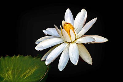 Photograph - Water Lily by Jerry Gammon