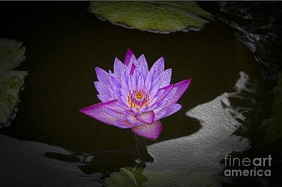 Photograph - Water Lily by Joe McCormack Jr