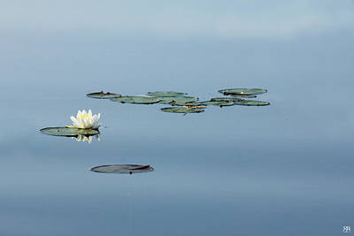 Photograph - Water Lily by John Meader