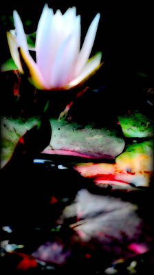 Digital Art - Water Lily  by Kathy Sampson