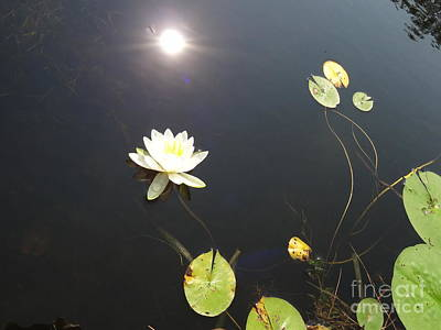 Photograph - Water Lily by Laurel Best