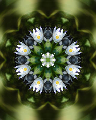Photograph - Water Lily Mandala by Peter Kallai