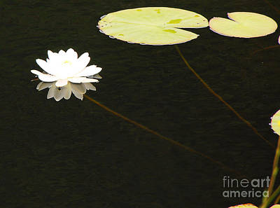 Photograph - Water Lily by Mary Carol Story