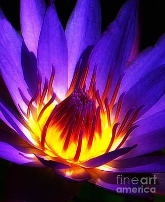 Water Lily Art Print by Mike Nellums