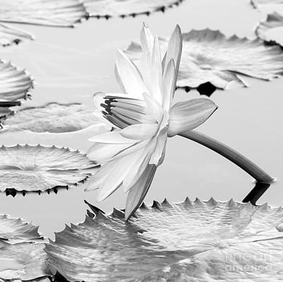 Photograph - Water Lily On Its Side #2 by Sabrina L Ryan