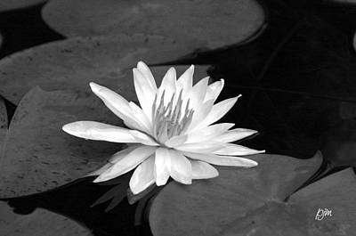 Art Print featuring the photograph Water Lily On Pad by Phil Mancuso