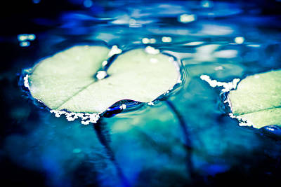 Photograph - Water Lily Pads From The Depth by Priya Ghose