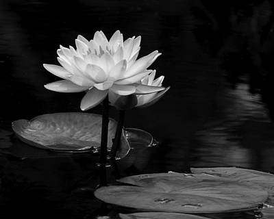 Photograph - Water Lily Pair by Dawn Currie
