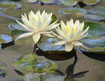 Photograph - Water Lily Pair by Richard Bryce and Family