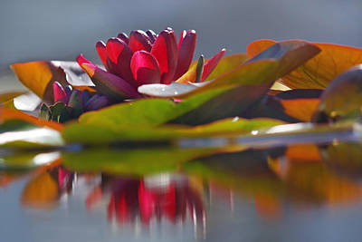 Photograph - Water Lily Paradise by Leda Robertson