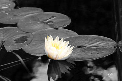 Art Print featuring the photograph Water Lily by Phil Mancuso
