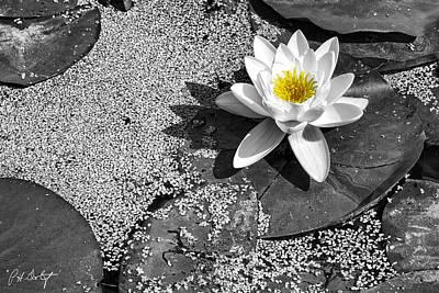 Water Lily Original