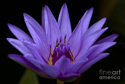 Photograph - Water Lily Photo by Meg Rousher