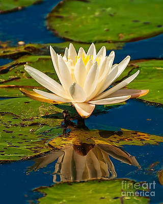 Train Photography - Water Lily by Photos By  Cassandra