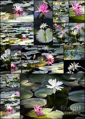 Photograph - Water Lily Pond Collage 2 by Carol Groenen