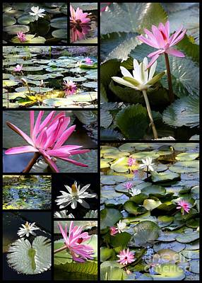 White Water Lilies Photograph - Water Lily Pond Collage by Carol Groenen