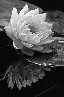 Photograph - Water Lily Reflections II by Dawn Currie