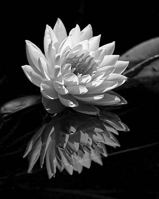 Photograph - Water Lily Reflections IIi by Dawn Currie