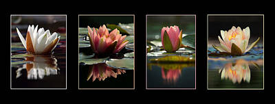 Photograph - Water Lily Reflections by Leda Robertson