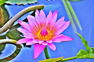Photograph - Water Lily by Richard Zentner