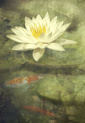 Contemplating Photograph - Water Lily by Scott Norris