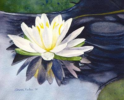 Lilly Pond Painting - Water Lily by Sharon Farber