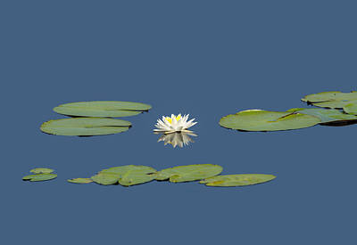 Photograph - Water Lily Star by John M Bailey