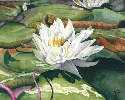 White Waterlily Painting - Water Lily by Tammy Crawford