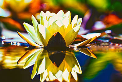 Photograph - Water Lily by Thomas Hall